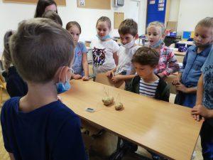 Zdjęcie przedstawia uczniów i eksperyment z prądem z wykorzystaniem ziemniaków.